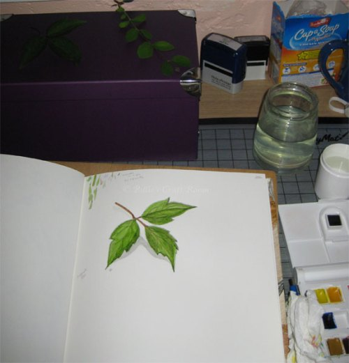 Watercolour sketch of a leaf