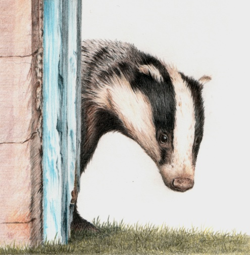 Badger by Gillian McMurray
