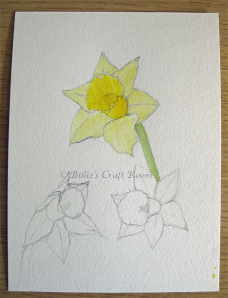Daffodils in watercolour