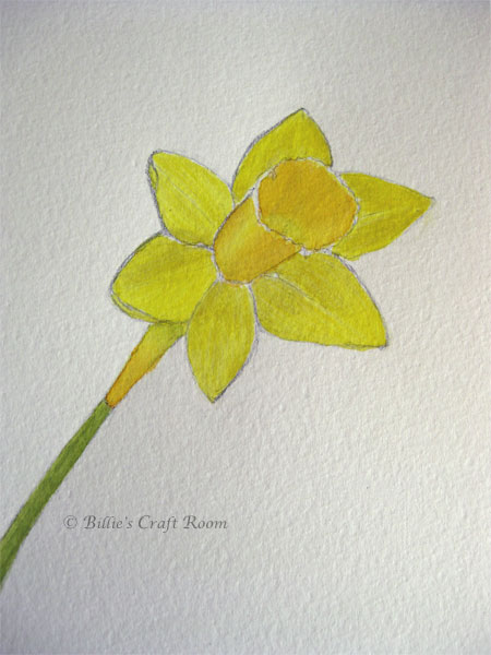 Daffodil in watercolour