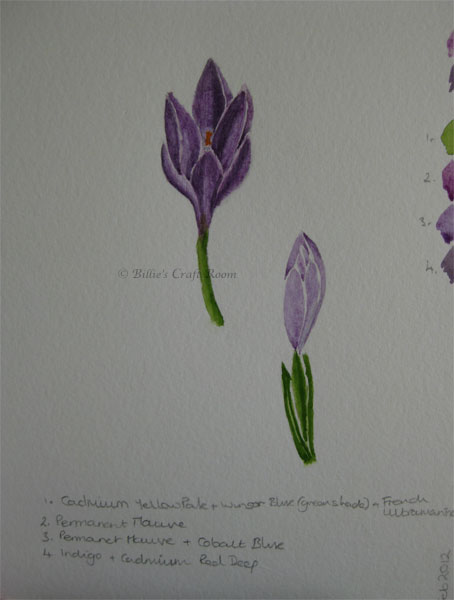 Crocus in Watercolour