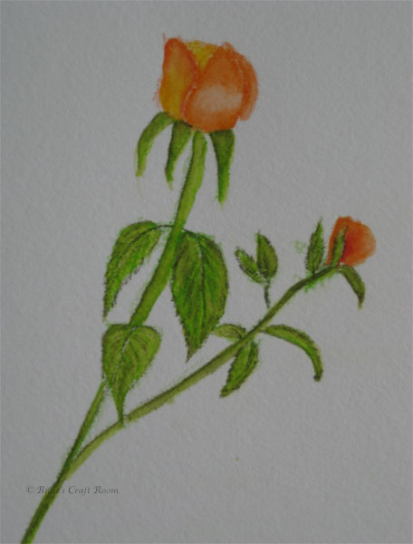 Rose in Derwent: Inktence pencils. Quick sketch