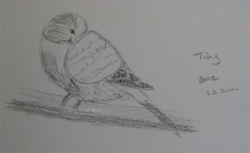 Ten minute sketch of my budgie Tiny, sleeping