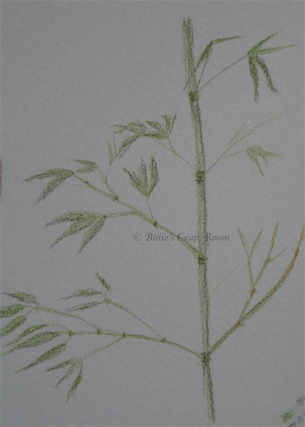 Bamboo sketch, in Derwent Inktense pencils