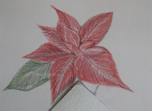 Poinsettia sketch in Inktense Pencils