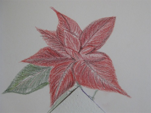 Poinsettia in Derwent Inktense pencils