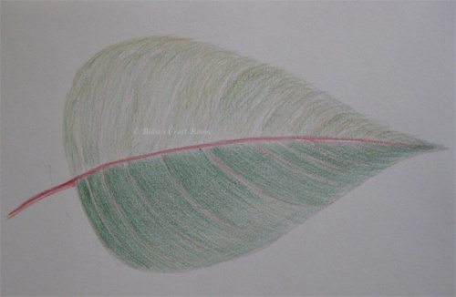 Poinsettia leaf sketch in Inktense pencils