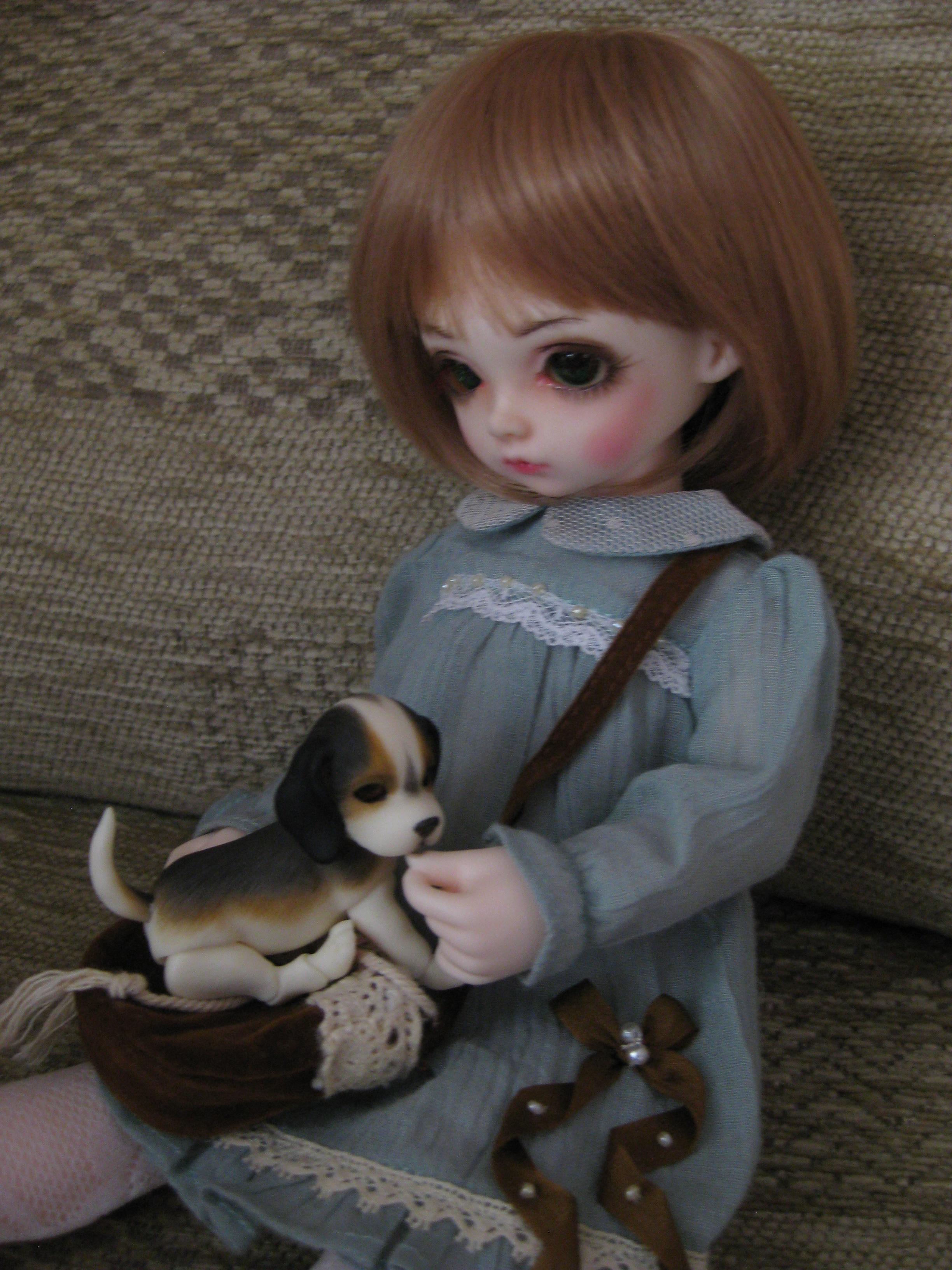 Rosen Lied, Tuesdays Child, Pansy with Ipplehouse Beagle